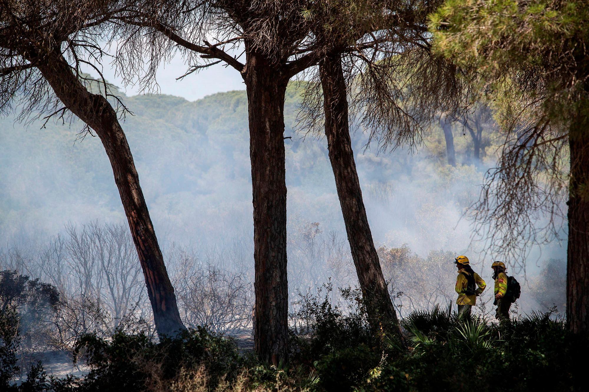 Las empresas forestales reclaman «agilidad» en las licitaciones públicas