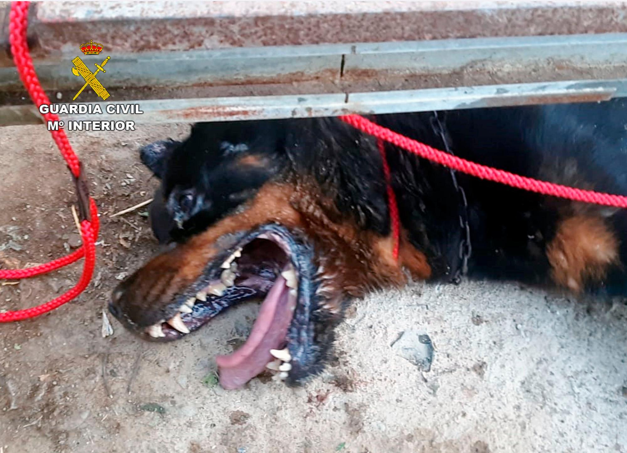 Un menor realizará servicios sociales durante cuatro meses por abandonar a su perro en Granada