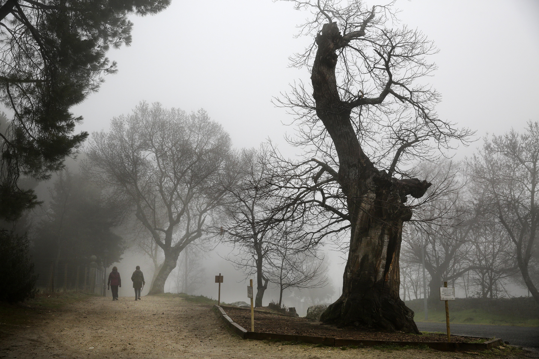 Por favor, no abrace a este árbol